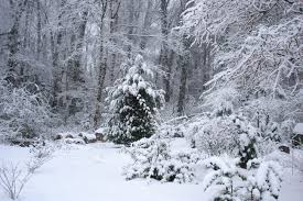 Winter is beautiful but not if the ground is frozen and you are unable to repair a failed septic system.